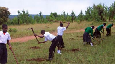 Sacred Seedlings Leading Effort to Reforest the World, Help Halt Climate Change
