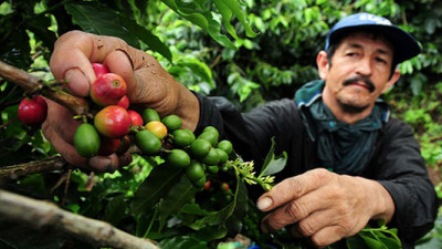 New Research Shows Coffee-Farming Communities Experiencing Fewer 'Thin Months'