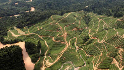 UCS: 'Sustainable Palm Oil Manifesto' Falls Short of a Revolution
