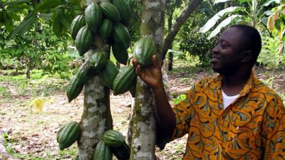 Bridging the Gap: Using Sustainable Finance to Improve Cocoa Farmer Livelihoods in Côte d'Ivoire