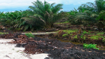 More Than Half of Global Suppliers Commit to 100% Sustainable Palm Oil