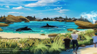 SeaWorld Doubling Size of Whale Environments After Documentary Ruins Revenue