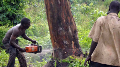 Moving Beyond Commitments: Collaborating to End Deforestation