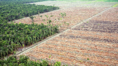 Unilever, WRI Partner to End Tropical Deforestation Through Supply Chain Transparency