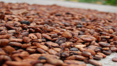 Hershey Expands Program to Benefit 10,000 Cocoa Farmers in Ivory Coast