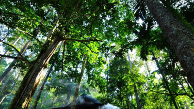 Asia Pulp and Paper, M&S, Barclays Sign New York Declaration on Forests at UN Climate Summit