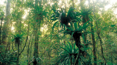 Collaboration Key to Survival of Forestry Businesses and the Planet