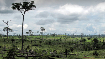 Working Towards Zero Deforestation: Lessons from Acre, Brazil