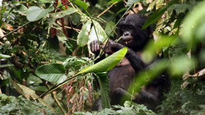 Congo, Wildlife Works Unveil Program to Protect 9M Hectares from Deforestation