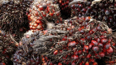 Bunge Jumps into Deforestation-Free Palm Oil with a Splash