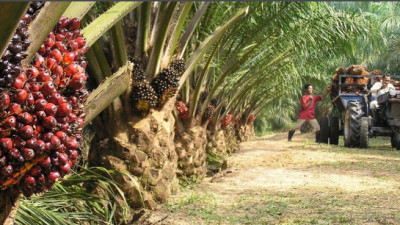 Global Investors Urge RSPO for Stronger Standards