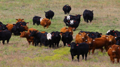 Cargill, Kennedy and Coe to Develop Beef Cattle Sustainability Assessment