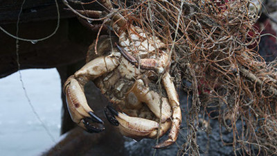 Ghost Fishing: Time for the Fishing Industry to Clean Up Its Deadly Mess