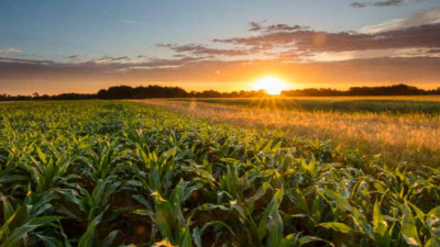 Tips from Dr. Bronner's, Sun World, Wrangler on Advancing Regenerative Ag Supply Chains