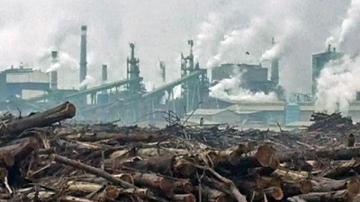 Paper Company Rejects FSC to Dodge Inquiry About Indonesian Deforestation Practices
