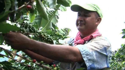 Study Shows Farmers Working with Rainforest Alliance and Nespresso Earn 87% More
