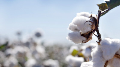 Bayer CropScience Launches e3 Sustainable Cotton Program