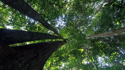 Leaders Discuss Private Sector's Role in Mitigating Climate Change at REDD+ Talks: NYC