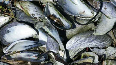 University of Bath Researchers Treating Wastewater with Seafood Shells