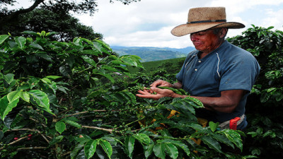 Fair Trade USA and Kiva Launch Microlending Program for Fair Trade Farmers