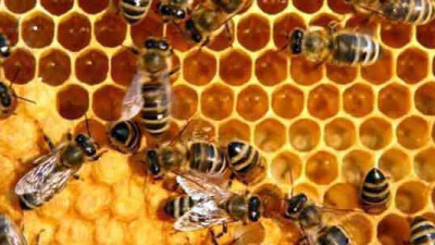 Monsanto Launches Coalition to Reverse Decline of Honey Bee Populations