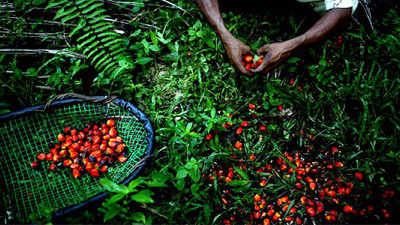 Unilever Pledges 100% Traceable Palm Oil by End of 2014