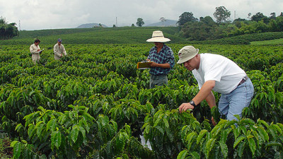 SAP Partners With Colombian Coffee Growers Federation to Support Rural Workers