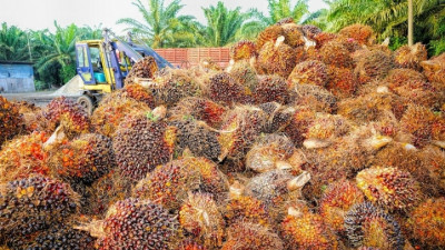 Unilever Suspends Sourcing from Indonesian Palm Oil Supplier Amid Deforestation Allegations