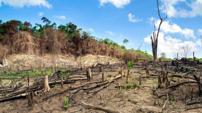 APP: With Holistic Forest Management, We Can Halt the Sixth Great Extinction