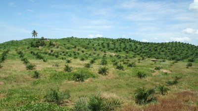 PepsiCo Reports Continued Progress Towards Goal of 100 Percent Sustainable Palm Oil
