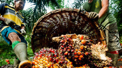 New Reporting Guidelines Aiming to Shed Further Light on Palm Oil Industry