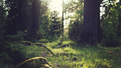 Industry Leaders Join Forces to Launch Guidance on Deforestation and Land-Use Change