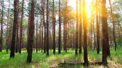 The Nature Conservancy on Forest Conservation Around the World