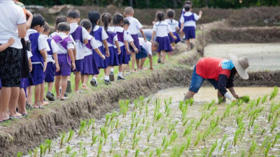 Mars Food Partners with the Sustainable Rice Platform