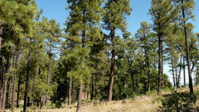 Study reveals economic benefits of forest thinning