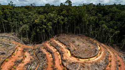 World's Largest Palm Oil Trader Gives Forest Destroyers Nowhere to Hide