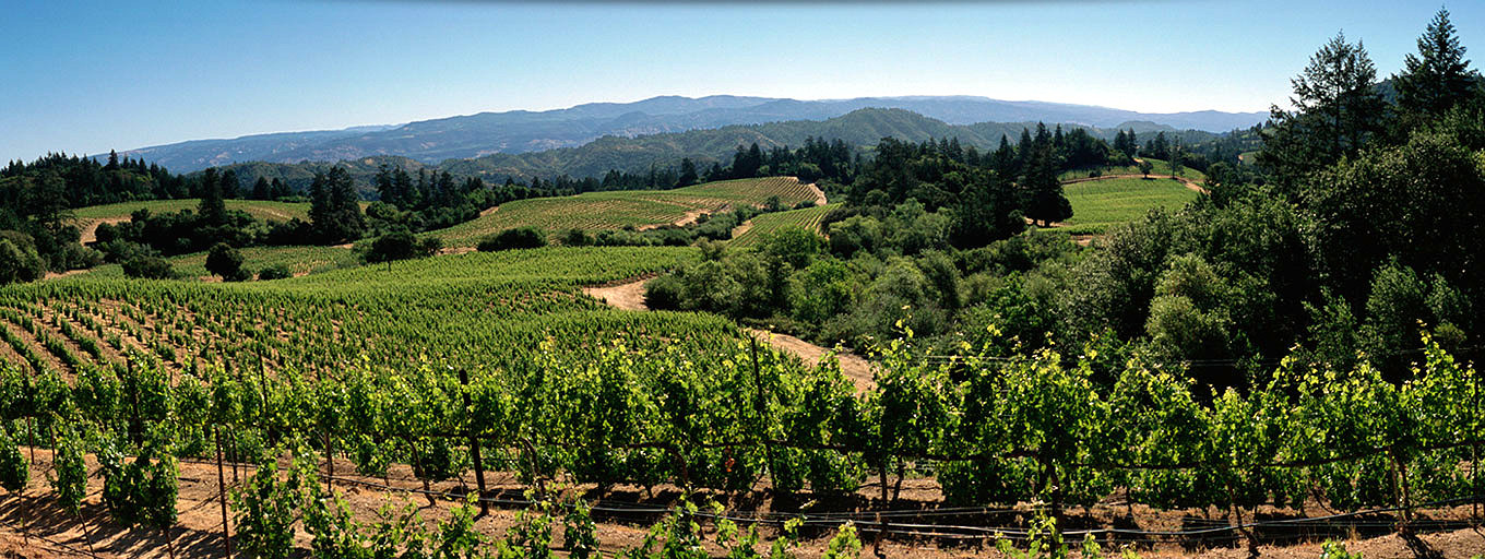 Grounded Summit: A Platform for Climate Solutions in California's Wine Country
