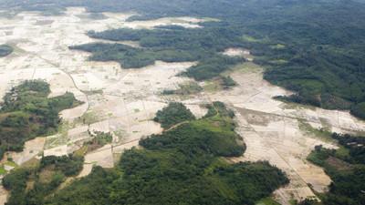 Investors Worth $615.7B Urge Latin America to Make Good on Zero-Deforestation Commitments