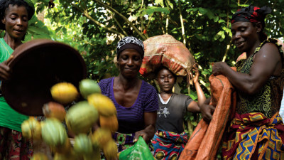 Living Incomes for Farmers Key to Ensuring Sustainability of Cocoa