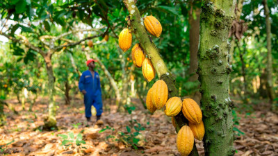 Hershey Announces Action Plans To Protect And Restore Forests In Cocoa Growing Region