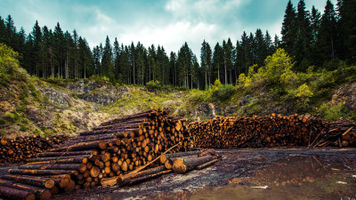 Quantis Guidance Ushers in New Era for Industry Land Use,  Forestry