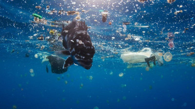 BBC Targets Environmental Impacts of Plastics, Textiles in New Documentaries