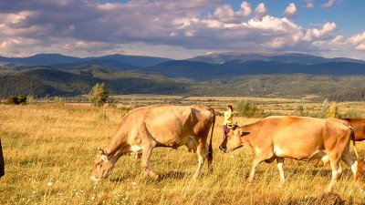 Timberland, Wrangler, VF Foundation Support Regenerative Ranching Research