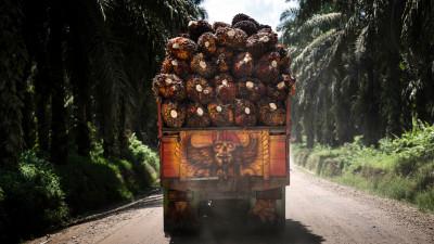 BASF, Estée Lauder, RSPO Partner to Enhance Sustainable Palm Oil Production