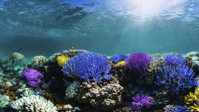 Adobe, Pantone Launch Custom Colors to Inspire Ocean Conservation, Climate Action