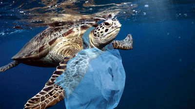 US Consumers More Concerned About Ocean Plastic Than Climate Change