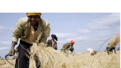 Meet the Team Re-Imagining Food Security in Ethiopia