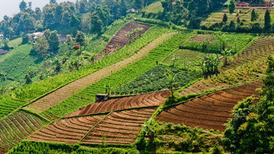 New SALSA Platform to Promote Sustainability in Agri-Business Across SE Asia