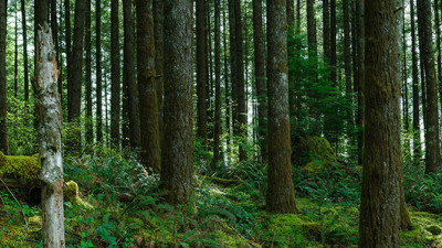 New Tool Aims to Assess Landscape-Level Forest Sustainability