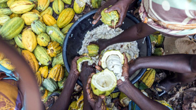Can a Mobile App Help Barry Callebaut Eradicate Poverty in the Cocoa Supply Chain?